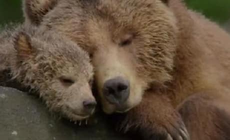 Bears Trailer: Disneynature Heads Back to the Forest