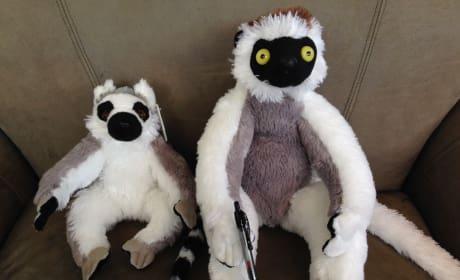 Lemurs Plus Toys