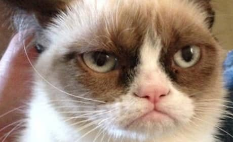 Grumpy Cat Movie In Development