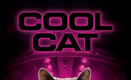 Cats and Dogs Cool Cat Poster