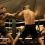 Warrior Movie Review: Families Who Fight
