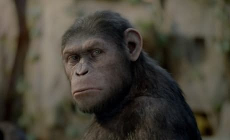 11 Rise of the Planet of the Apes Fun Facts: Before the Dawn!