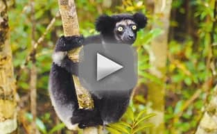 Island of Lemurs: Madagascar Trailer