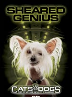 Cats and Dogs Sheared Genius Poster