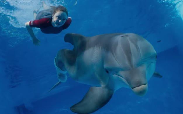 Dolphin Tale 2 Photo Still