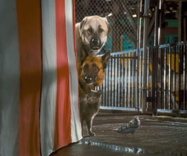 Espionage Dogs
