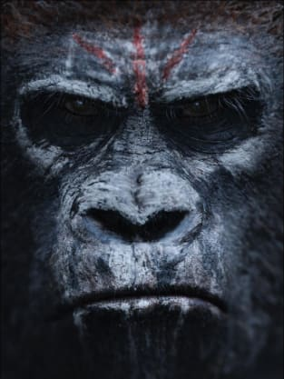Dawn of the Planet of the Apes One Sheet
