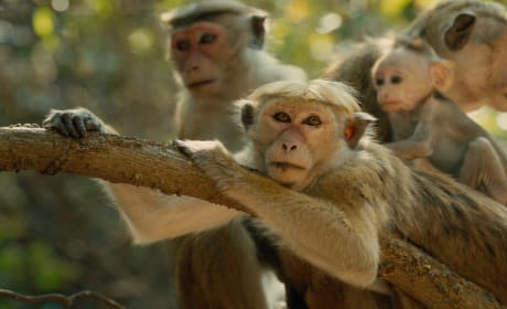 Monkey Kingdom Photo Still