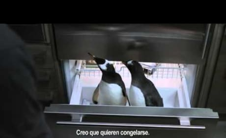 Mr Poppers Penguin's International Trailer