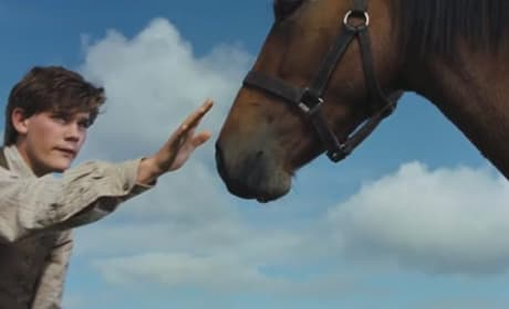 DVD Previews: We Bought a Zoo & War Horse