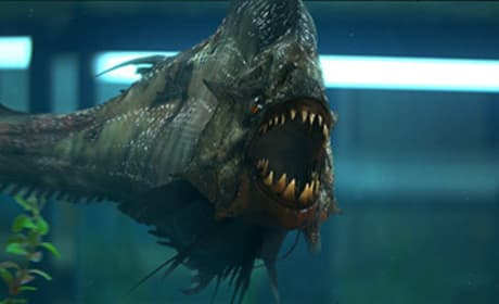 Project Greenlight Winner to Direct Piranha 3D Sequel
