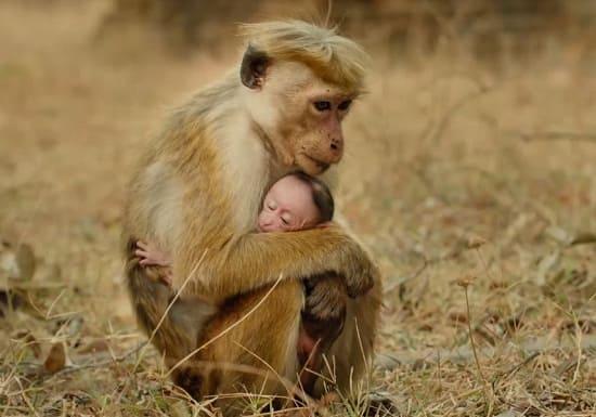 Monkey Kingdom Still Photo