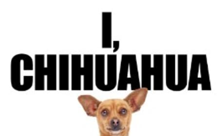 Beverly Hills Chihuahua Somehow Tops Box Office Results