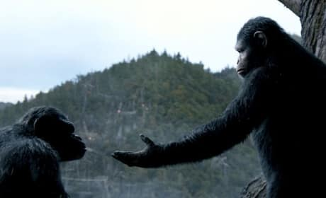 Dawn of the Planet of the Apes Pic