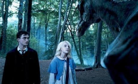 Harry and Luna