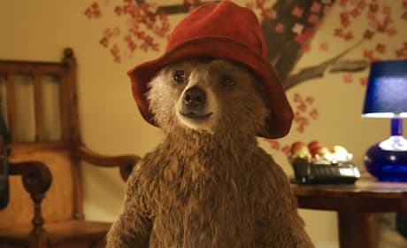 Paddington Review: A Beary Good Family Movie!