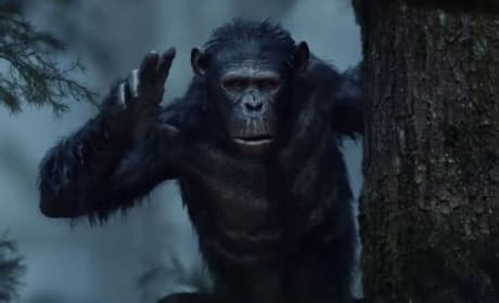 Dawn of the Planet of the Apes Still