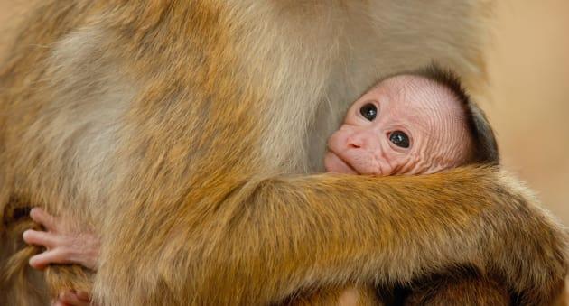 Monkey kingdom baby photo