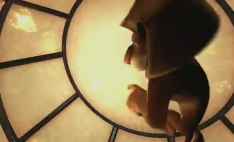 DVD Preview: Madagascar 3, That's My Boy & Moonrise Kingdom