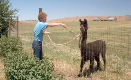 Napoleon Dynamite Tina the Llama