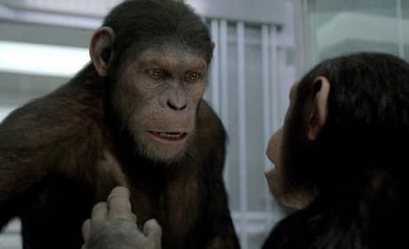 Rise of the Planet of the Apes Sequel