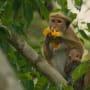 Disneynature's Monkey Kingdom Photo