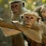 Monkey Kingdom Photo Still