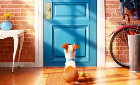 The Secret Life of Pets Photo