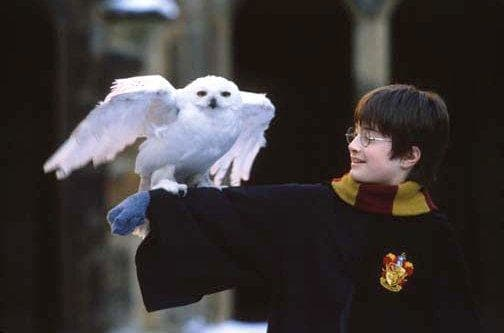 Harry Potter Picture