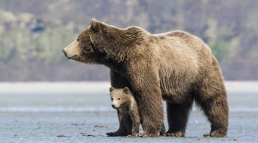 Bears Movie Still