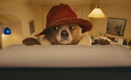 Paddington Bear Photo