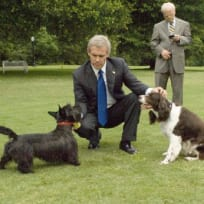 W and his Dogs