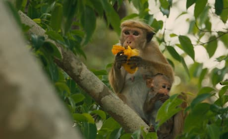 Disneynature's Monkey Kingdom Photo
