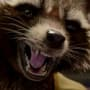 Rocket Raccoon From Guardians of the Galaxy