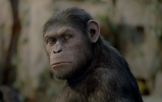 Apes' First Word