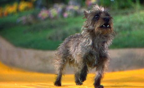 Toto Picture