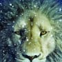 Chronicles of Narnia Aslan Poster