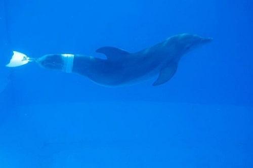 Winter in Dolphin Tale