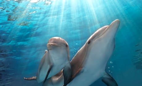 Dolphin Tale 2 Still Photo