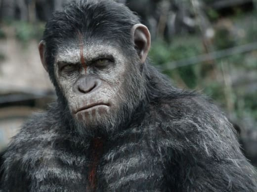 Dawn of the Planet of the Apes Caesar