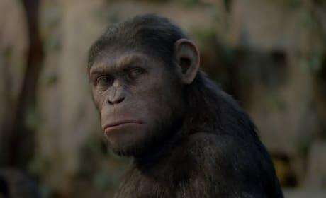 Andy Serkis is Caesar