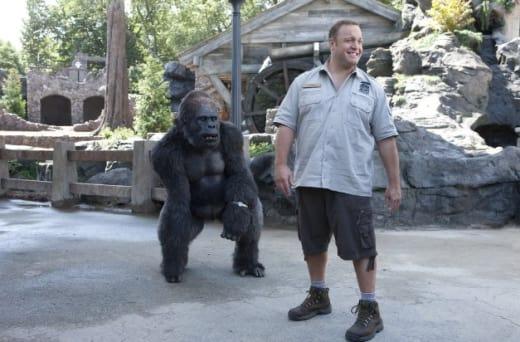 Gorilla Friends